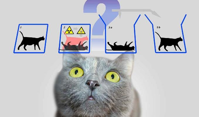 耶鲁科学家也许能设法拯救薛定谔的猫