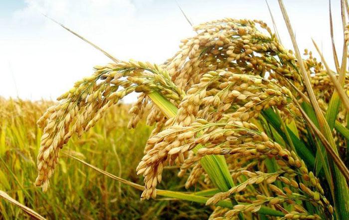 专家研究发现饮食习惯的改变将影响全球粮食生产