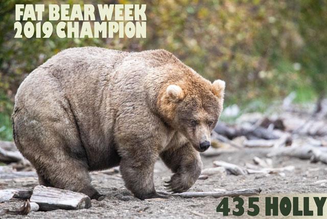 """美国票选最胖的熊:""""胖皇后""""夺魁 天天吃三文鱼"""