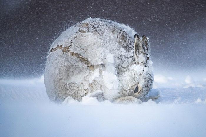 2020年BigPicture自然摄影大赛获奖作品揭晓
